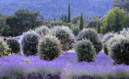 Choisissez ce façadier pour avoir une maison provençale