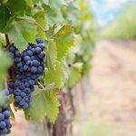 Savoir acheter une propriété viticole